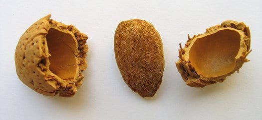 cracked shell of an almond
