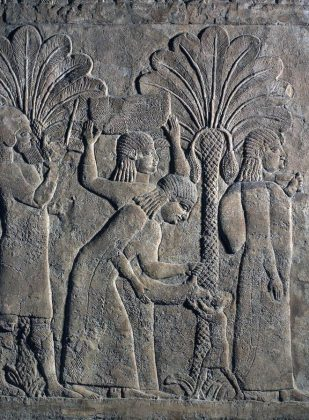 Assyrian relief of date cultivation