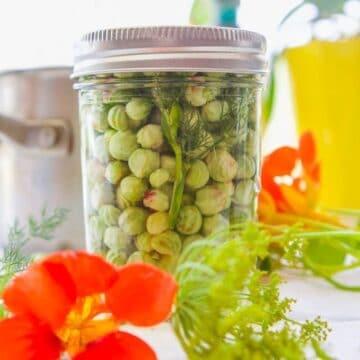 a jar of nasturtium seeds being pickled