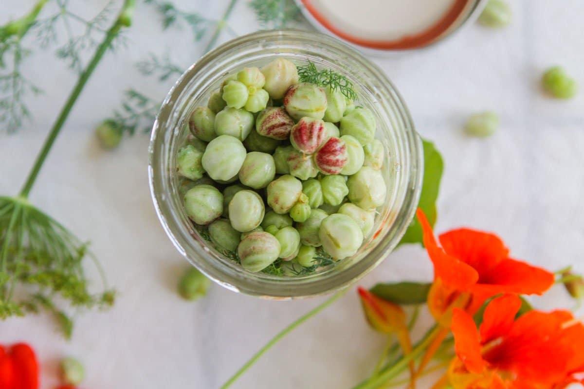 nasturtium pods in canning jar