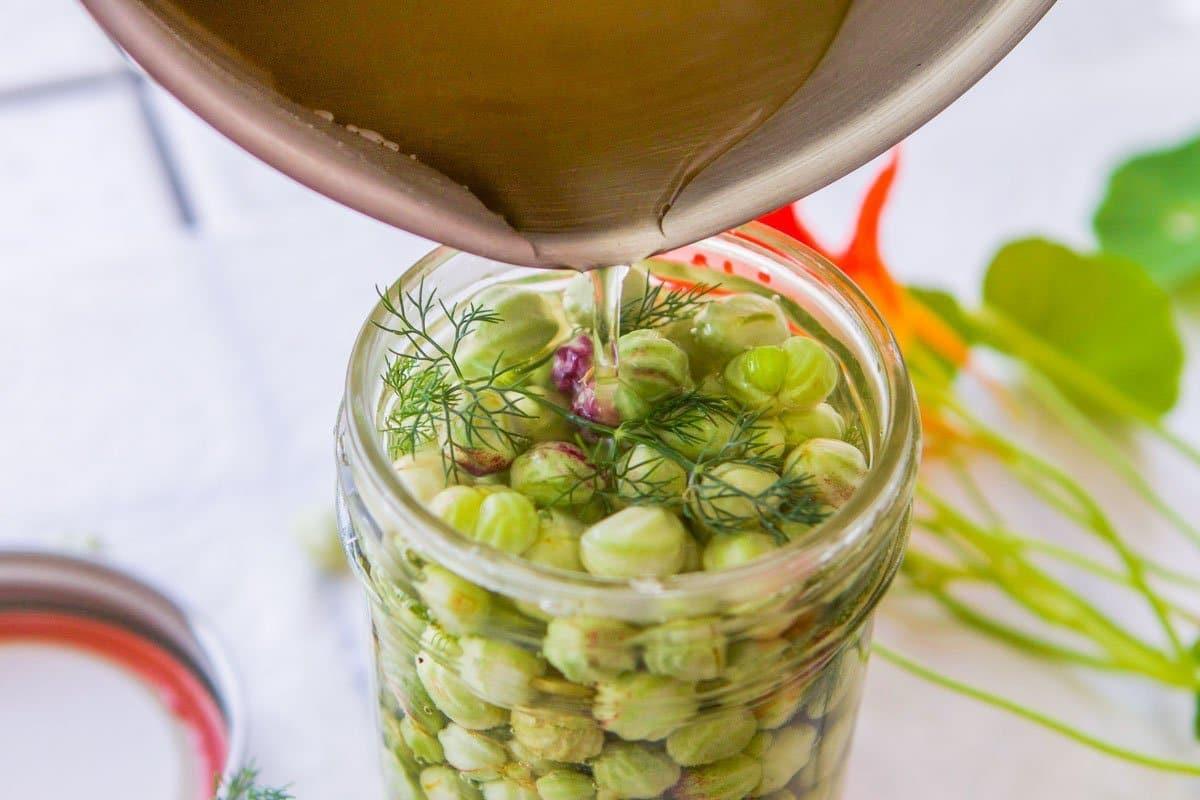 pouring brine over nasturtium seeds