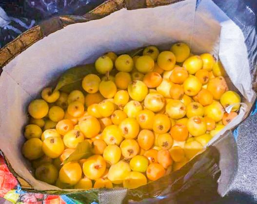 a large bag full of loquats