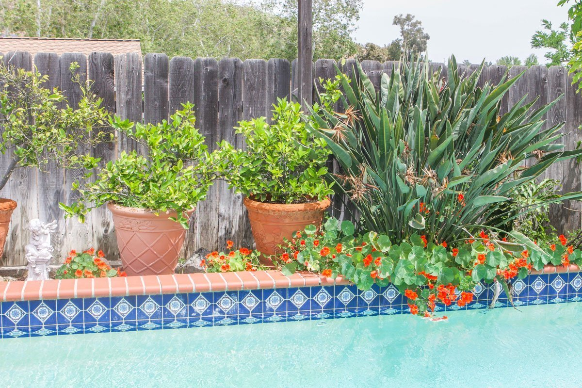 pool with plants around it.