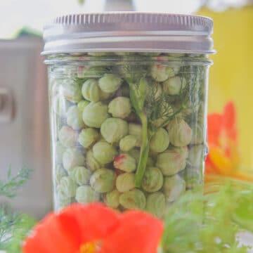 pickled nasturtium seeds in a bottle