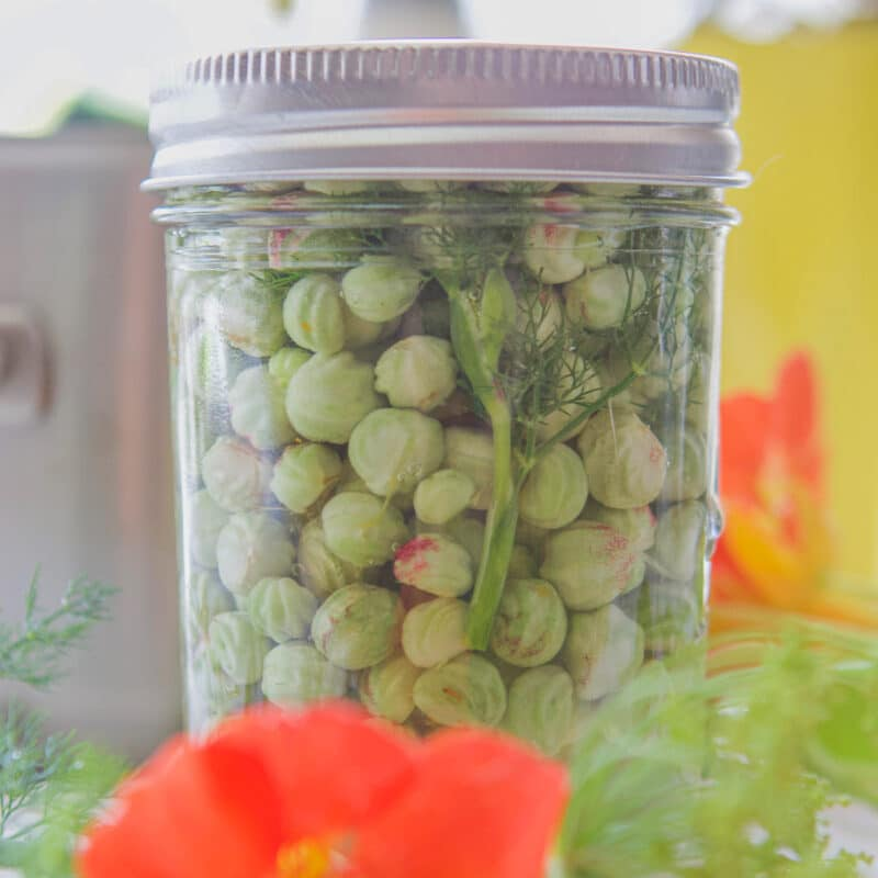 pickled nasturtium seeds in a bottle