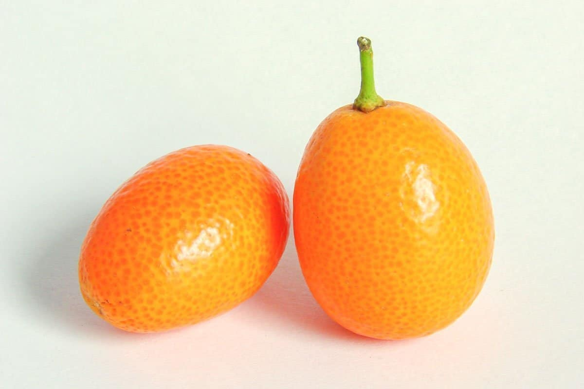 two Kumquats