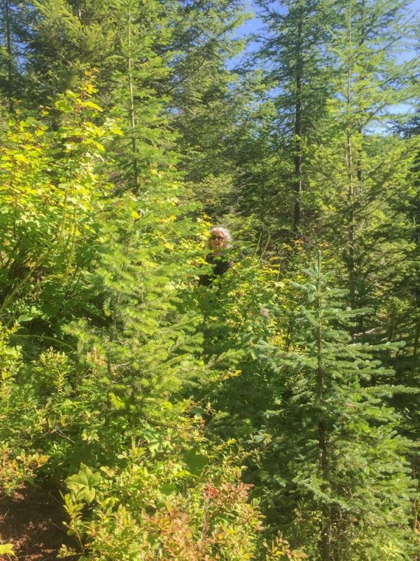 picking huckleberries in a heavily wooded area