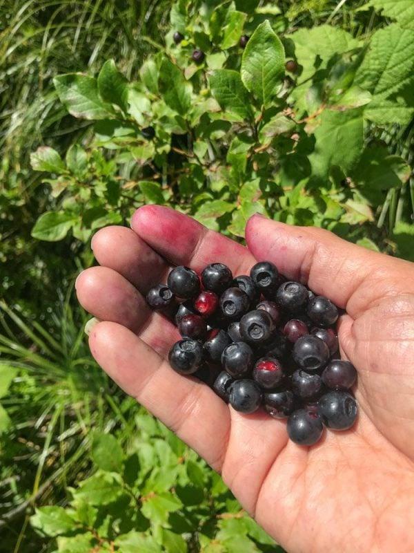 a handful of huckleberries