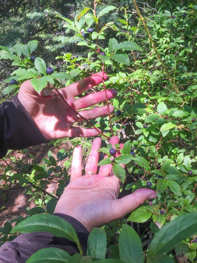 huckleberry stained hands
