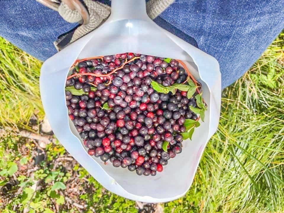 huckleberries in a jug