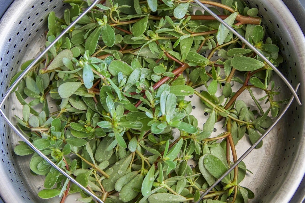 purslane in a steam basket