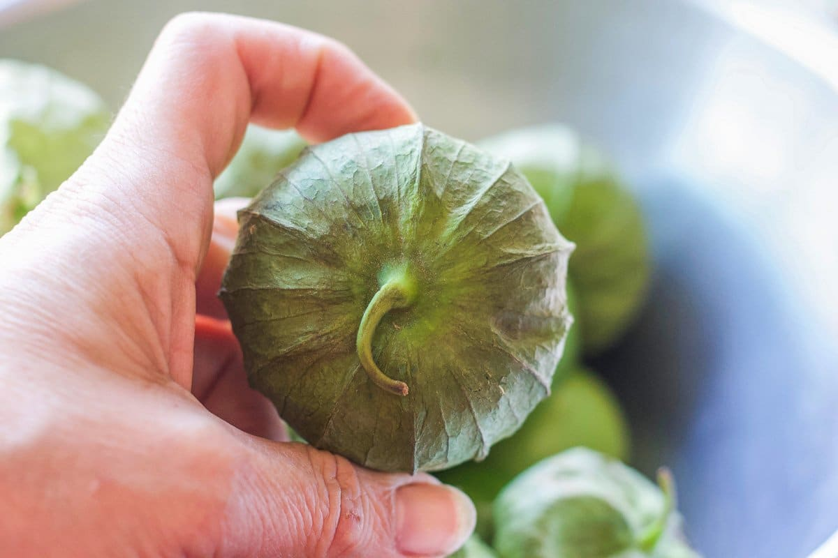 one tomatillo in a hand