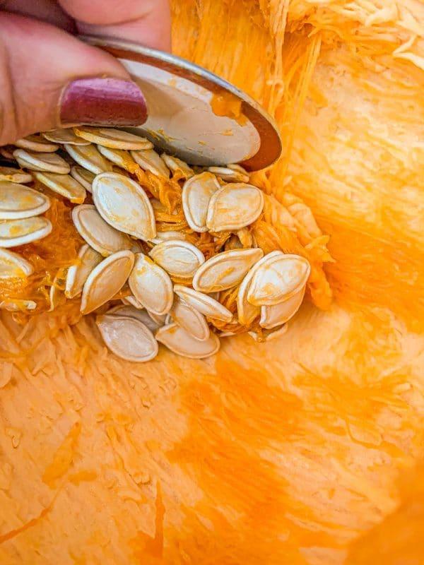 scraping pumpkin seeds out of a pumpkin