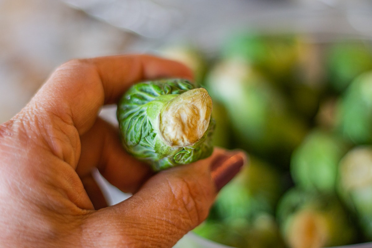 untrimmed brussel sprout