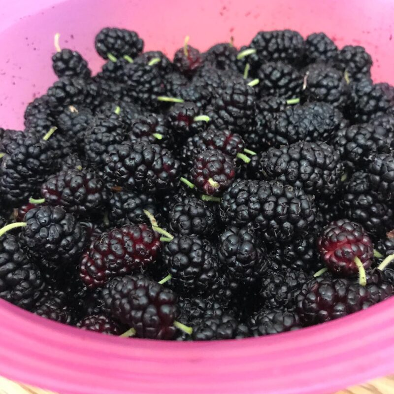 mulberries in a pink bowl