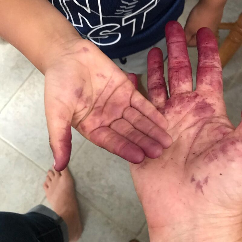 mulberry stained hands
