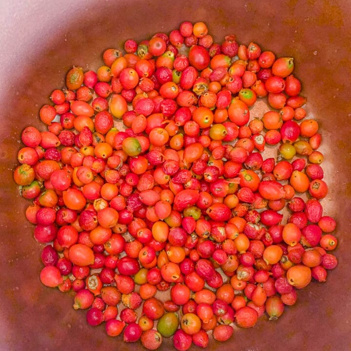rosehips in a pot