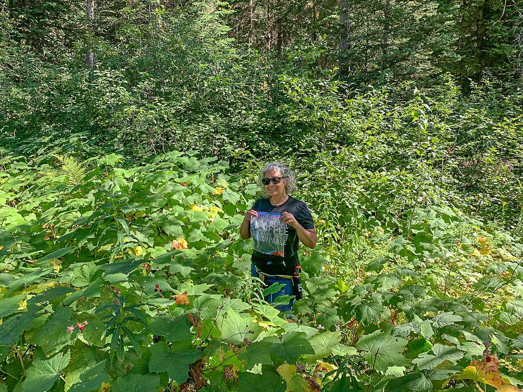 woman picking thimbleberries