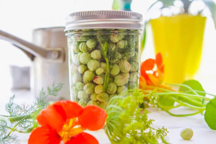 a jar of pickled nasturtium seeds with a pot behind it and flowers around it