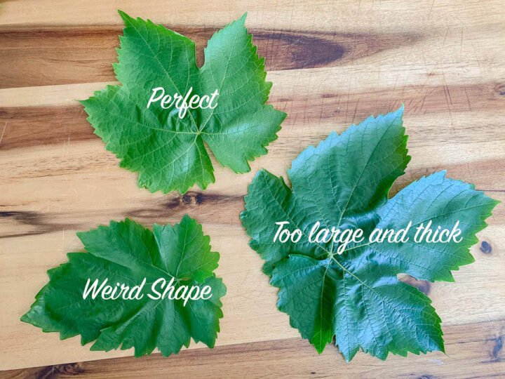 types of grape leaves