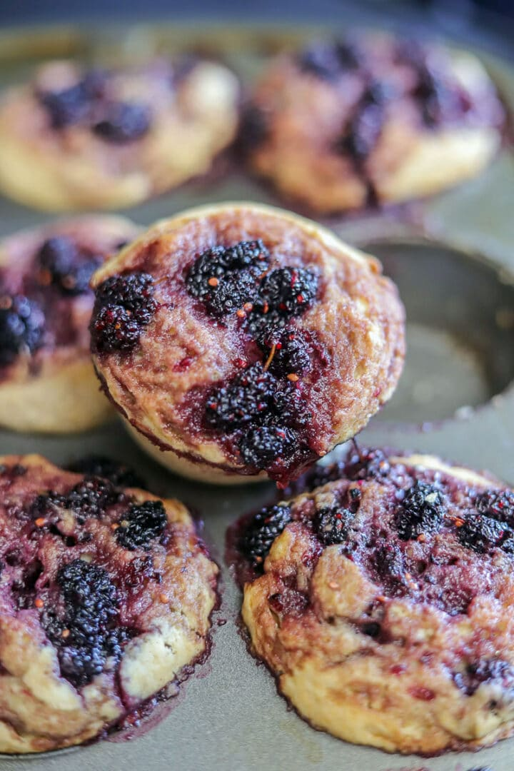 mulberry muffins in a muffin pan with one muffin onto