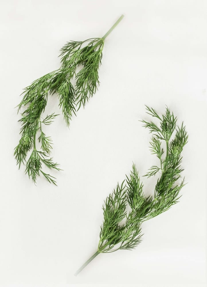 two sprigs of dill